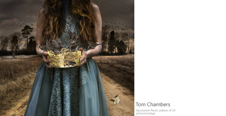 Tom Chambers Photograpy
