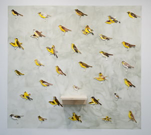 Trevor Gould: all the yellow birds of Quebec